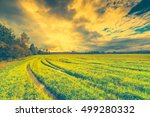 field in the forest with wheel... | Shutterstock . vector #499280332