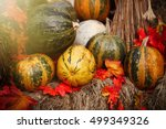 Autumn Harvest .assortment Of...