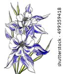 northern blue columbine... | Shutterstock . vector #499359418