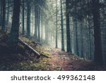 trail in a dark pine forest on... | Shutterstock . vector #499362148