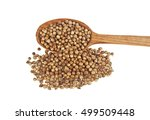 coriander seeds in wooden spoon ... | Shutterstock . vector #499509448
