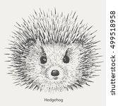 drawing the hedgehog.vector | Shutterstock .eps vector #499518958