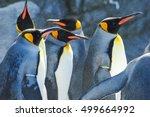 Penguins In Asahiyama Zoo ...