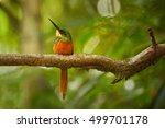 Colorful Tropical Bird  Galbula ...