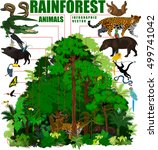 rainforest vector illustration. ... | Shutterstock .eps vector #499741042