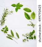 various fresh herbs from the... | Shutterstock . vector #499793425