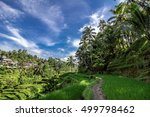 Terraced Fields At Ubud  Bali ...