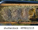 hive sub frame bees wax   Shutterstock . vector #499812115