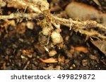 Nematode Plant Problems