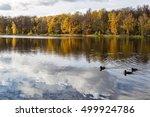 Lake With Three Ducks   Trees...