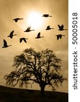 Silhouette Of Flying Geese Ove...