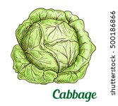 Fresh Green Cabbage Vegetable...