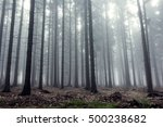 Mysterious Fog Among The Trees...