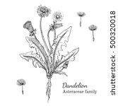 ink dandelion herbal... | Shutterstock .eps vector #500320018