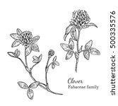 ink clover herbal illustration. ... | Shutterstock .eps vector #500335576