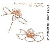 set of detailed hand drawn...   Shutterstock .eps vector #500411716
