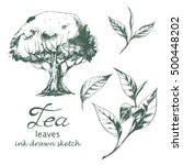 vector set of tea leaves and... | Shutterstock .eps vector #500448202