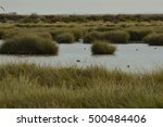 marshes  birds and animals in...   Shutterstock . vector #500484406