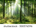 morning in the forest   Shutterstock . vector #500576596