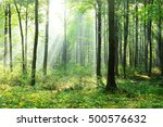 morning in the forest   Shutterstock . vector #500576632
