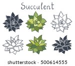 Set Succulent Plant In The...