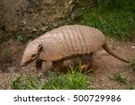 six banded armadillo ... | Shutterstock . vector #500729986