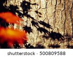 colorful leaves in russian... | Shutterstock . vector #500809588
