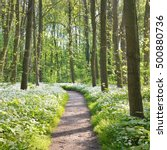 Small photo of Walkway through a spring forest with blooming white flowers. Wild garlic (Allium ursinum) in Stochemhoeve, Leiden, the Netherlands