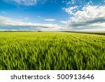 green wheat field | Shutterstock . vector #500913646