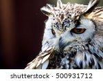 portrait of the eurasian eagle... | Shutterstock . vector #500931712