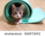 Stock photo kitten sitting on a yoga mat the cat is on the mat for yoga fitness 500973592