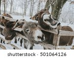 Funny Donkey In Winter