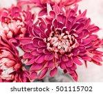 pretty fall flowers   Shutterstock . vector #501115702