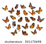 Stock photo big set monarch butterfly isolated on white background 501170698