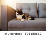cute cat on the sofa | Shutterstock . vector #501180682