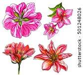 tropical flowers blossom... | Shutterstock . vector #501248026