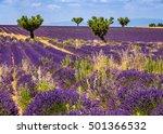 Lavender Fields In Valensole...