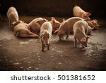 pigs | Shutterstock . vector #501381652
