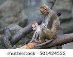 Image Of Mother Monkey And Bab...