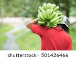 farmer bearing green banana on... | Shutterstock . vector #501426466