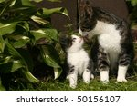 Stock photo cats family 50156107