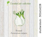 pure essential oil collection ... | Shutterstock .eps vector #501616228