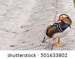 Mandarin Duck Aix Galericulata...