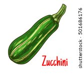 sketched zucchini vegetable... | Shutterstock .eps vector #501686176
