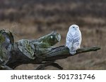 lonely snowy owl in boundary... | Shutterstock . vector #501731746