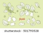 medicinal plants set. exotic... | Shutterstock .eps vector #501793528