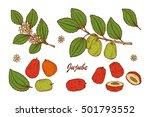medicinal plants set. exotic... | Shutterstock .eps vector #501793552