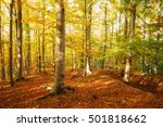 beautiful autumnal day in... | Shutterstock . vector #501818662