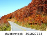 autumn leaves in yamagata japan  | Shutterstock . vector #501827335