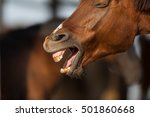 Red Horse Yawing Outdoor